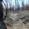 The Track is indistinguishable alongside this creek bed after the  fire.