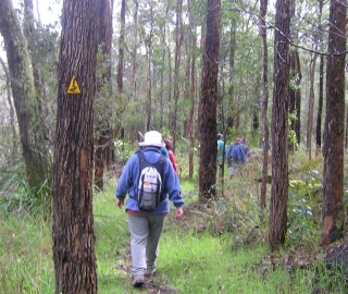 The Bibbulmun Track follows the Blackwood River south of the Blackwood campsite