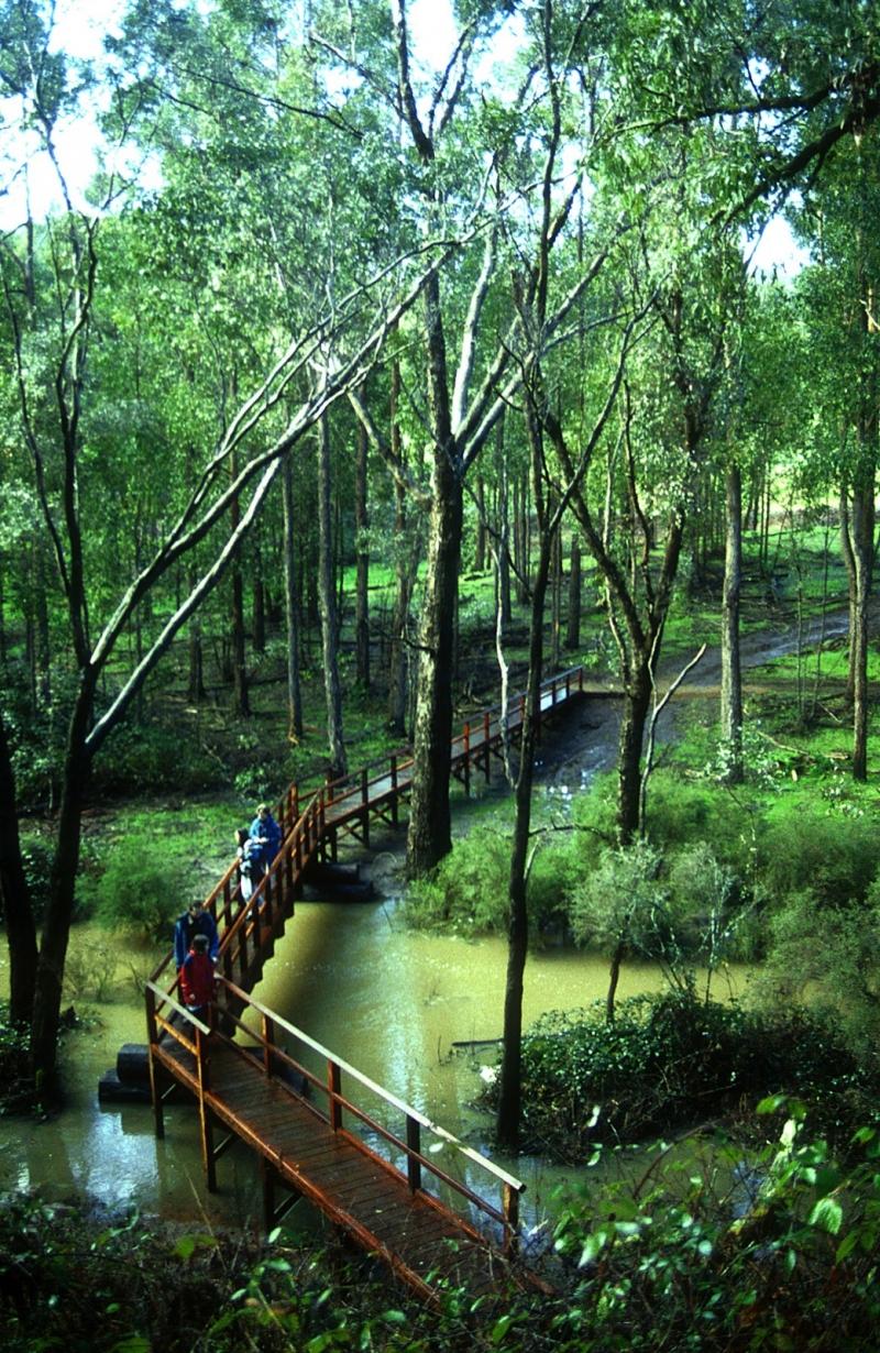 Streets Of Willow >> Balingup   Along the Track   Bibbulmun Track